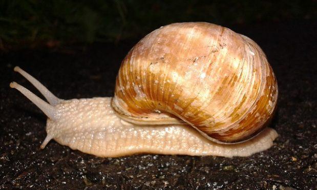 Combatting snails and slugs